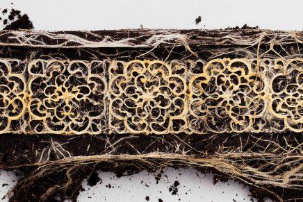 Diana Scherer onderzoekt plantenwortels