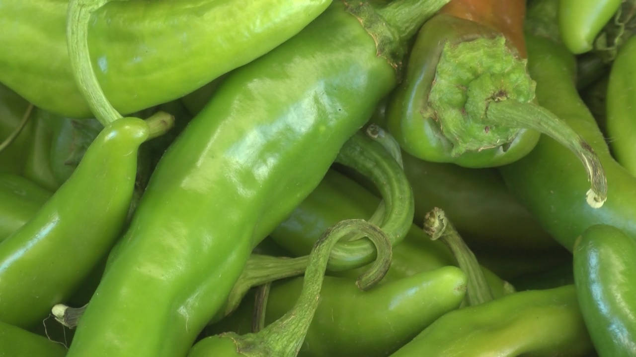 green chile_237012