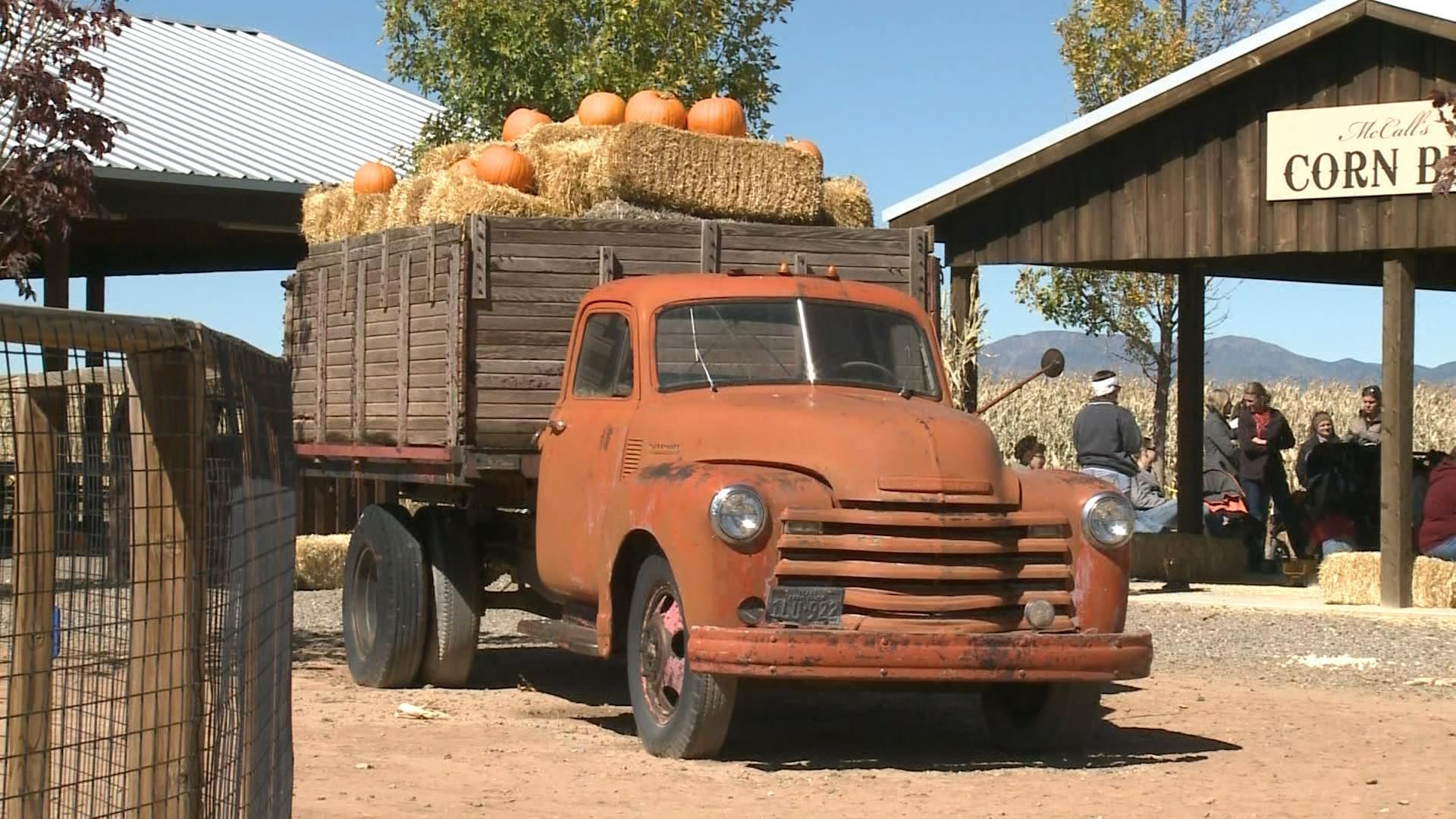 mccalls pumpkin patch_461753