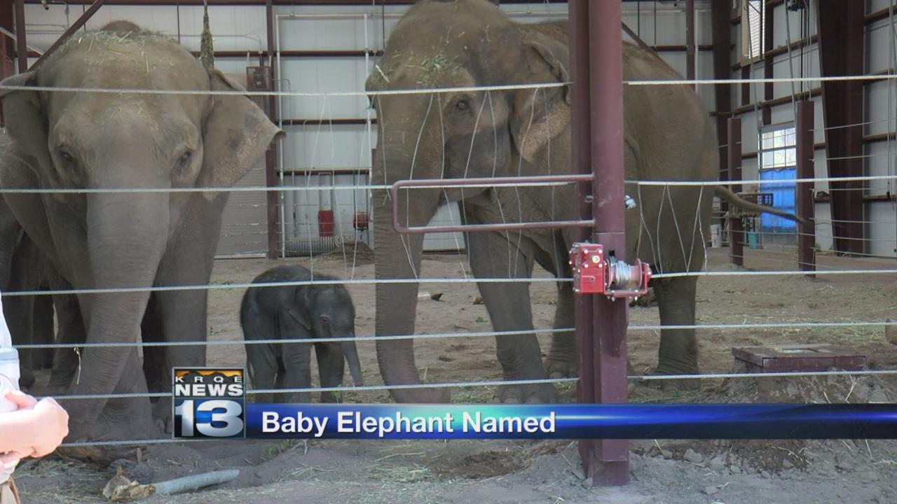 ABQ BioPark's baby elephant has a name_1525953524892.jpg.jpg
