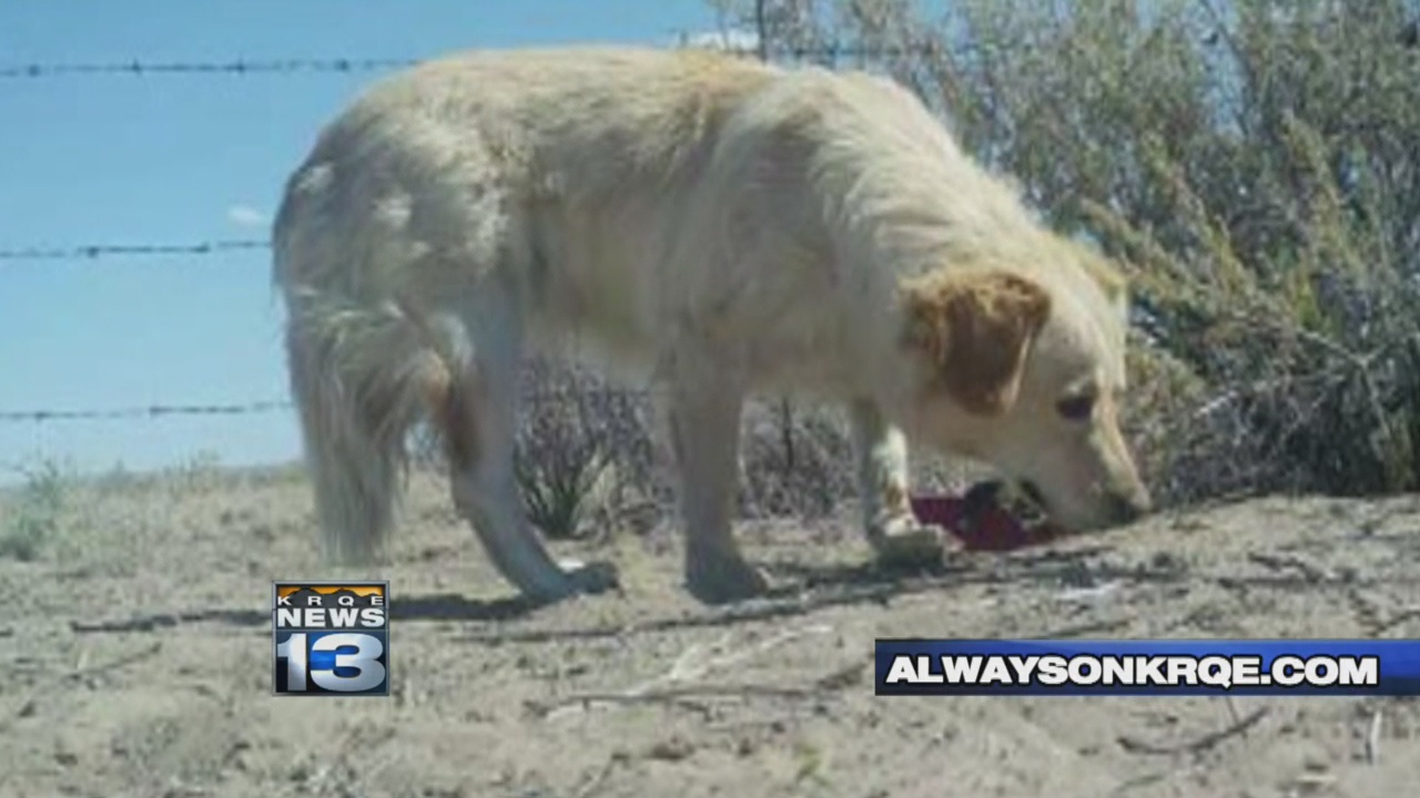 Community helps dog that's been roaming Crownpoint since 2016_1529707875928.jpg.jpg