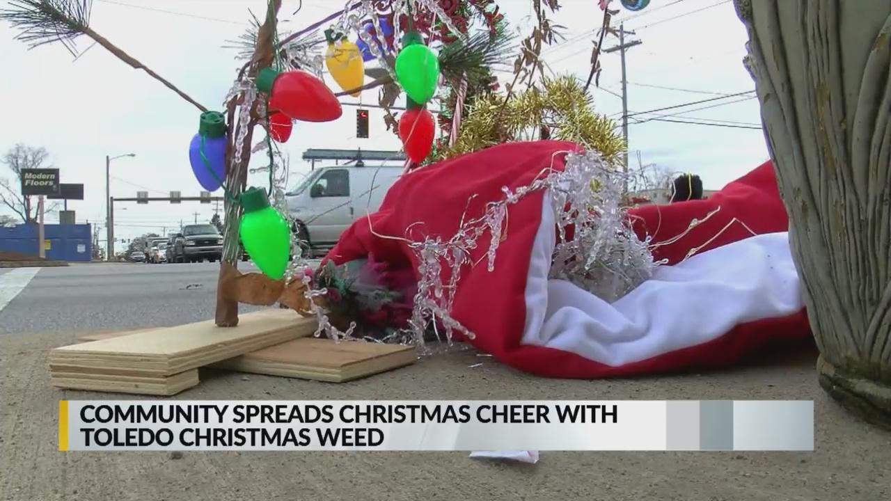 Toledo Christmas Weed.Toledo Christmas Weed