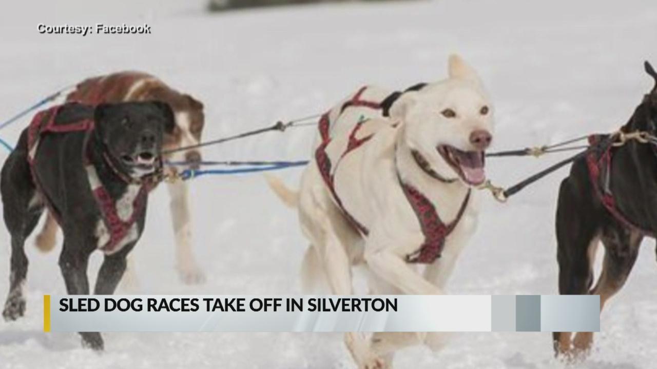 Organizers remain hopeful ahead of Silverton sled dog race_1546559459177.jpg.jpg