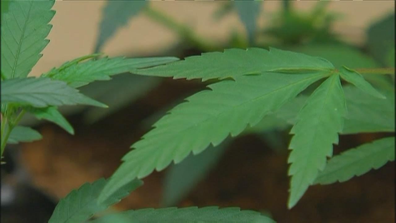 marijuana legalization_1552709728125.jpg.jpg