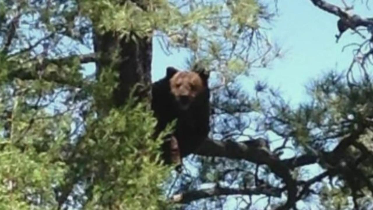 black bear stock_1557088969131.jpg.jpg