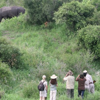 Jock Safari Lodge White Rhino