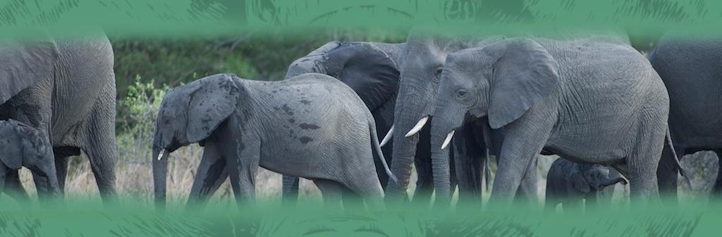 Kapama Private Game Reserve Elephants Roaming