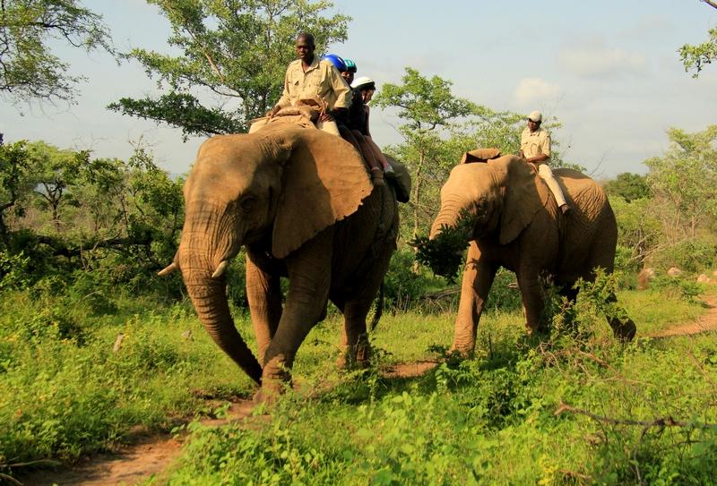 Manyatta Rock Camp Elephant Safari
