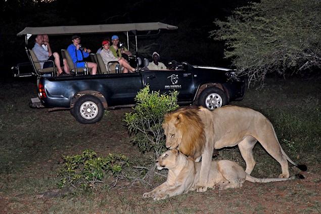 Manyatta Rock Camp Night Safari Lions