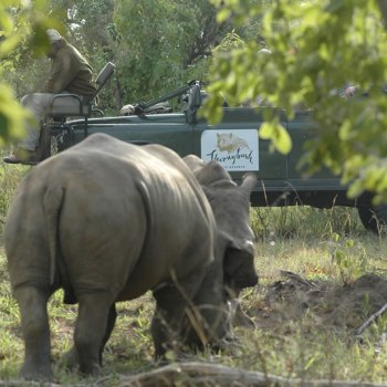 Serondella Game Lodge Game Drive Rhino