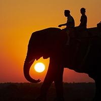 Shumbalala Game Lodge Elephant Back Safaris