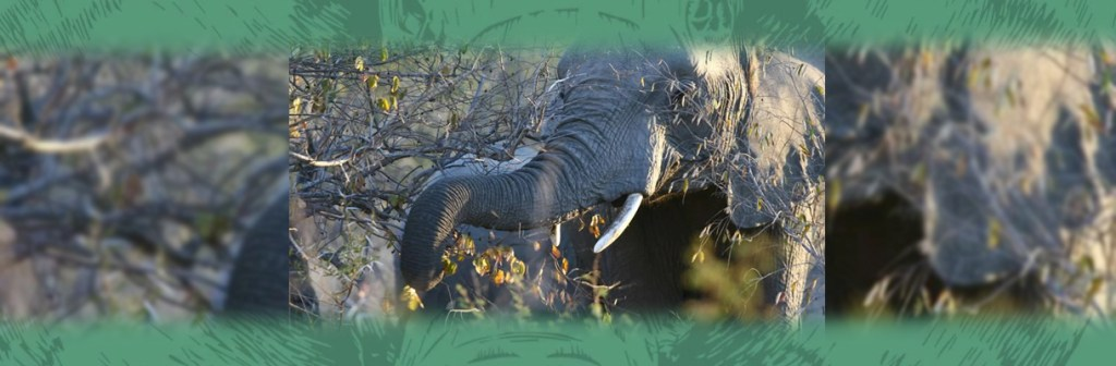 Serondella Game Lodge Elephant Grazing