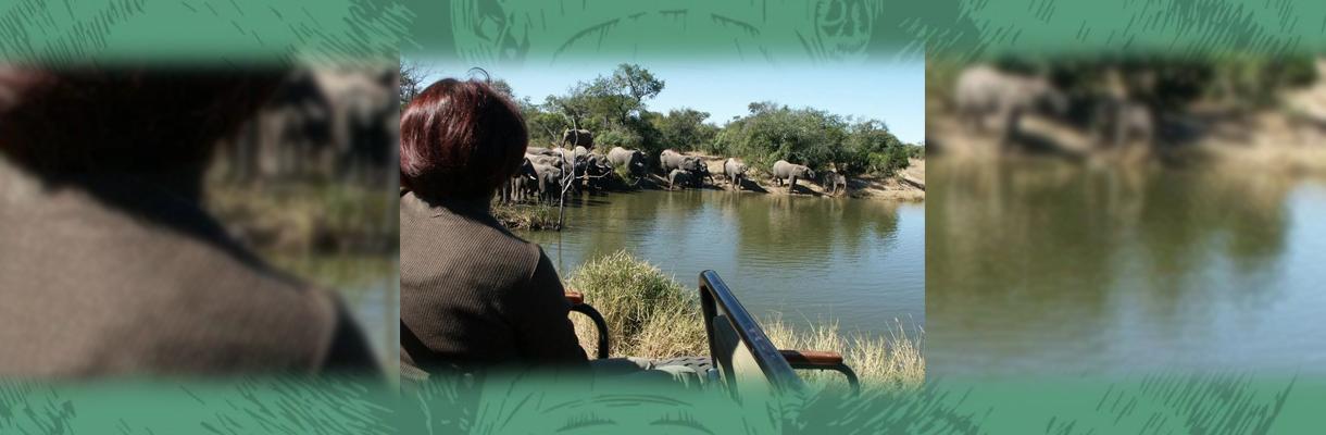 Shumbalala Game Lodge Elephants at Waterhole