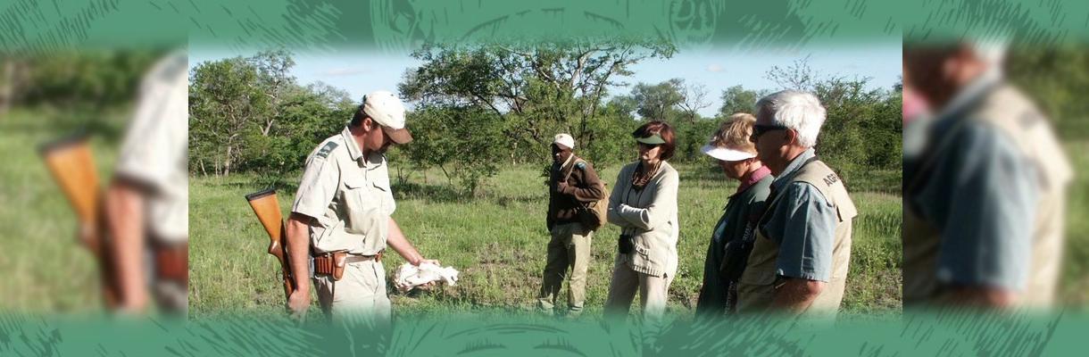 Shumbalala Game Lodge Typical Safari Walks