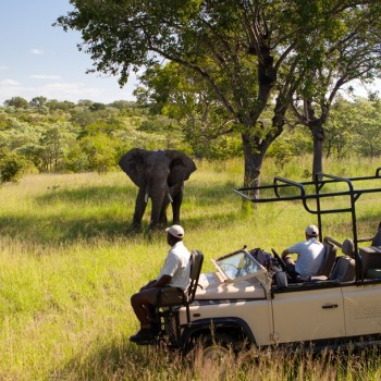 Kruger National Park Packages Lukimbi & Idube Game Reserve Game Drive