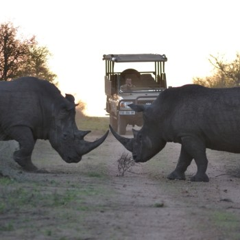 Hamiltons Tented Camp Rhino Site