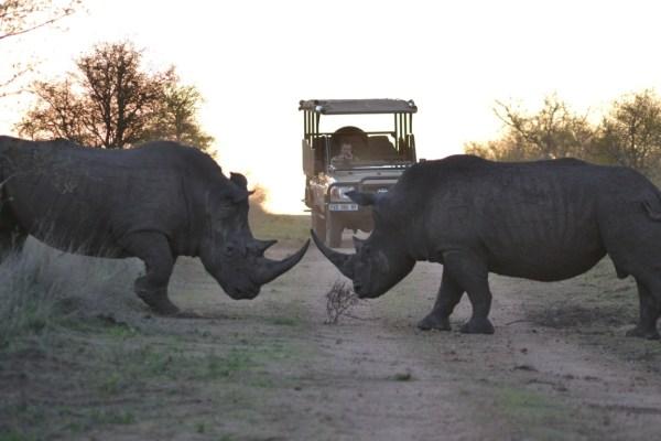Hamiltons Tented Camp Rhino Site