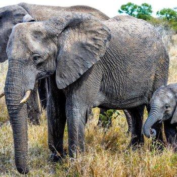 Honeyguide Mantobeni Camp Elephants