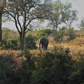Imbali Safari Lodge Elephant