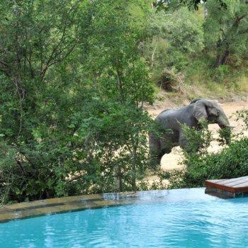 Imbali Safari Lodge Swimming Pool
