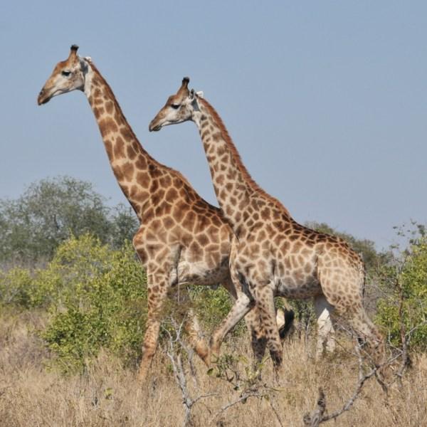 Imbali Safari Lodge Wildlife