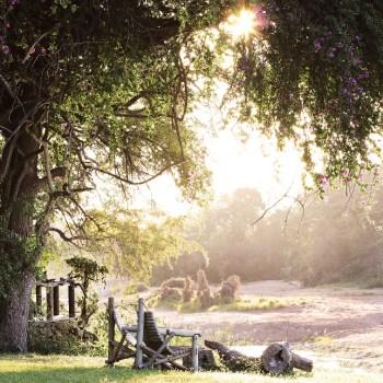 Motswari Private Game Reserve Scenic View of the Landscape