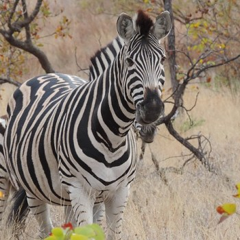 Baluleni Safari Lodge Wildlife