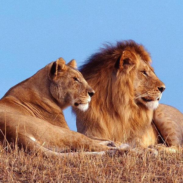 Kruger featured image Klaserie Private Nature Reserve