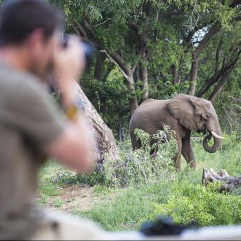 Amani Safari Camp Elephant Grazing
