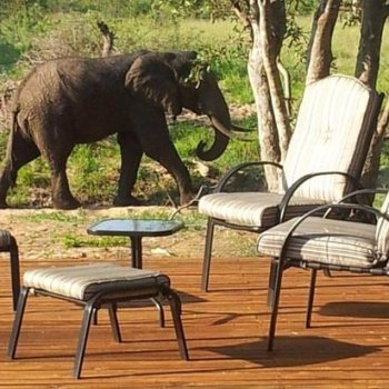 Amani Safari Camp Elephant Greeting