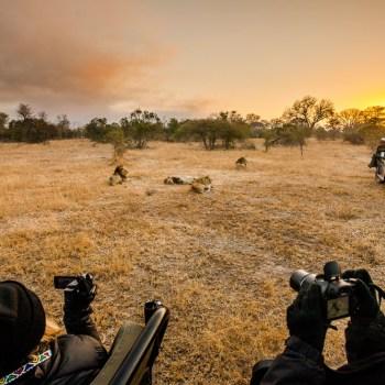 Amani Safari Camp Wildlife Photography