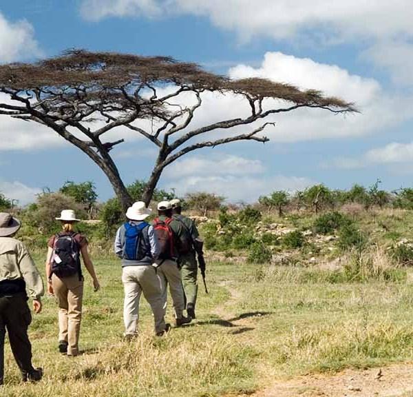 Chapungu Luxury Tented Camp Walking Safari
