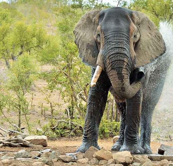 Hoyo Hoyo Safari Lodge Activities Elephant