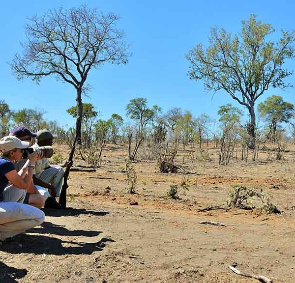 Hoyo Hoyo Safari Lodge Activities Game Walks