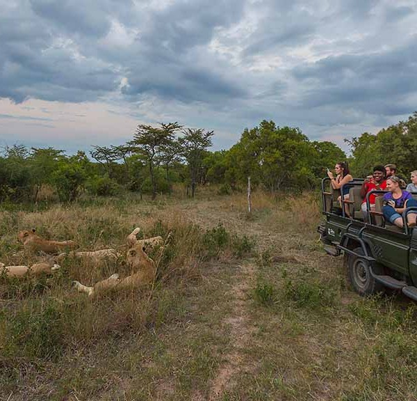 Thornybush Game Lodge Safari Drives