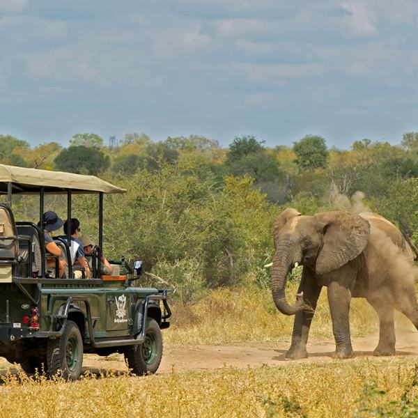 Camp Jabulani Game Drive Safari