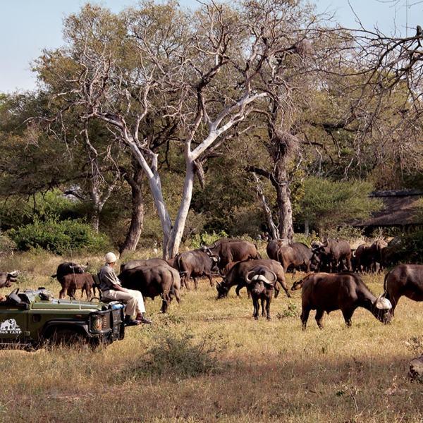 Kings Camp Game Drive Safari