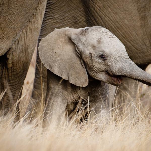 Motswari Geiger's Camp Elephants