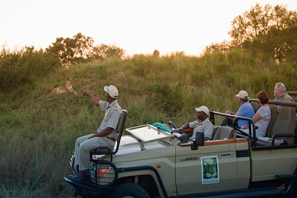 Naledi Bushcamp and Enkoveni Camp Game Drive Safari