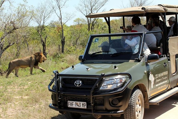 Nkambeni Safari Camp Game Drive Safari