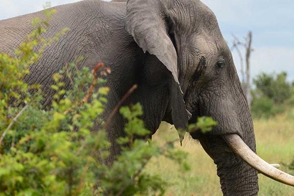 Pestana Kruger Lodge Elephant