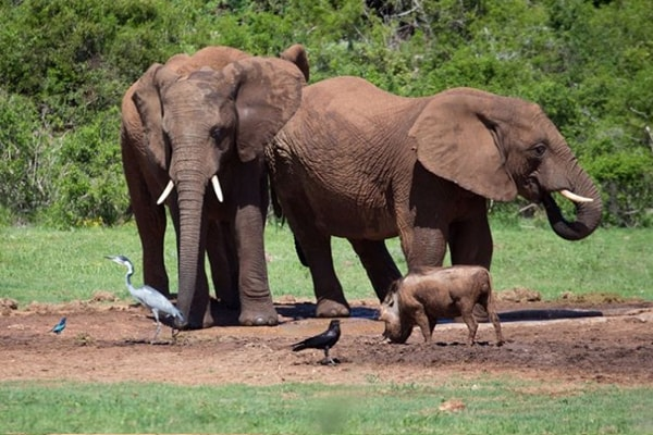 Pungwe Bush Camp Elephant Herd