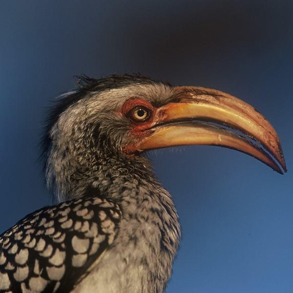 Rhino Post Safari Lodge Hornbill