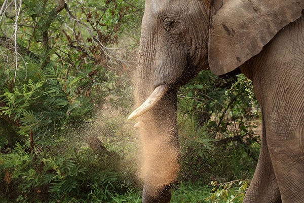 Sausage Tree Safari Camp Elephant Dust Bath