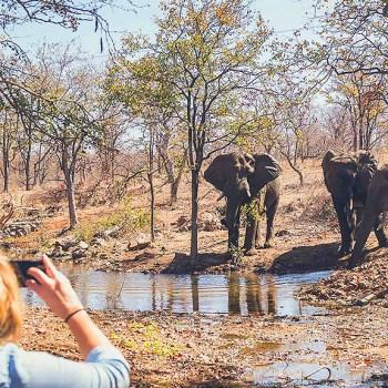 Kruger National Park Elephant Observation