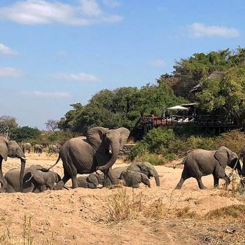 Kruger National Park Big 5 Section