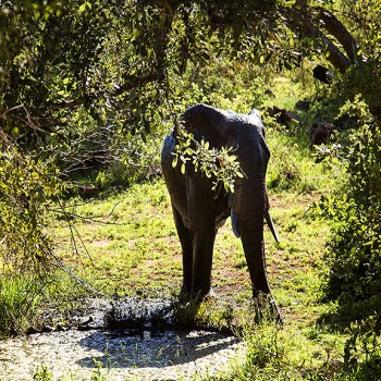 Machaton Private Camp Elephant