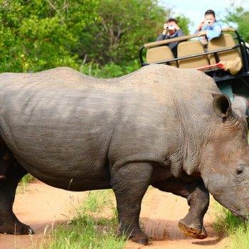 Motswari Geigers Camp Rhino
