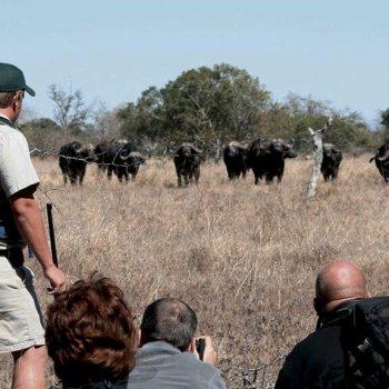 Nkambeni Safari Camp Walking Safari