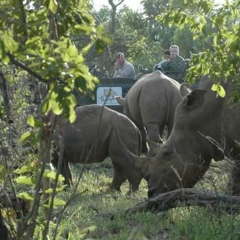 Nkelenga Tented Camp Rhino